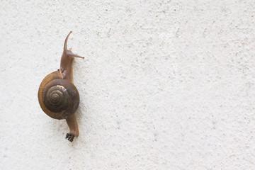 Single brown snail walking along gray brick wall.