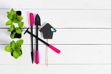 Garden tools with young sprouts, shoot, seedling, sapling and topper on natural wooden white background. Flat lay with copy space