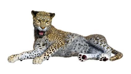 3D Rendering Big Cat Leopard on White