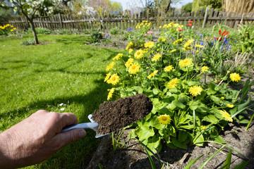 Kompost - Naturdünger auf der Schaufel - Gartenarbeit