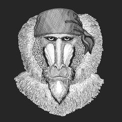 Monkey, baboon, dog-ape, ape Cool pirate, seaman, seawolf, sailor, biker animal for tattoo, t-shirt, emblem, badge, logo, patch. Image with motorcycle bandana