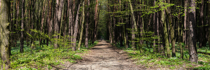 Photo Stands Road in forest panorama of footpath in the forest on sunny summer day
