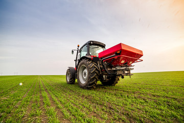 Farmer in tractor fertilizing wheat field at spring with npk Wall mural