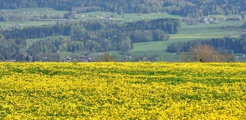 champs...printemps