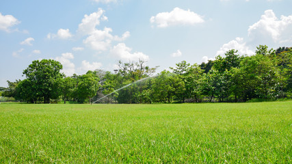 Beautiful park and green tree plant in public park with green grass field.