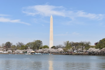 Famous Washington Monument in Washington D. C with beautiful Lake Tidal Basin in front in the USA