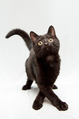 Funny black kitten and legs with a cross
