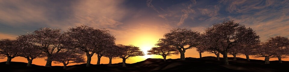 blossoming trees on a sunset background, panorama of flowering cherries under the sun,