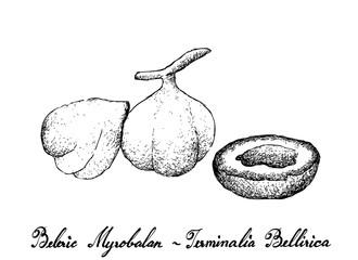 Hand Drawn of Beleric Myrobalan Fruits on White Background