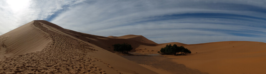 PANORAMA OF DESERT WITH BIG DUNE AND FOOTSTEPS NEAR TREES. MERZOUGA. MOROCCO. MARCH 2018
