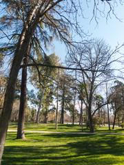 View of the Retiro Park in Madrid. The Buen Retiro Park is a historic garden and public park