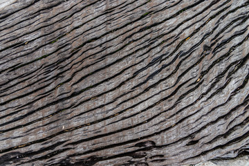 Tree bark wooden texture and pattern for background