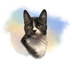 Cute black and white cat with big eyes. Portrait of pet. Realistic drawing of kitten on watercolor background. Good for print T-shirt. Hand painted illustration. Watercolor animal art collection: Cats