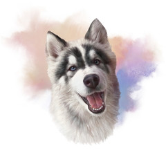 Watercolor Portrait of Siberian husky with blue eyes, Alaskan Klee Kai. Dog is man's best friend. Watercolor Animal collection: Dogs. Hand Painted Illustration of Pets. Good for print T-shirt, pillow