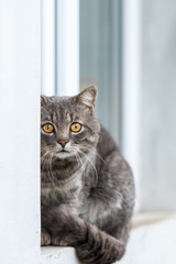 Cute gray cat sitting on the windowsill of the house outdoor