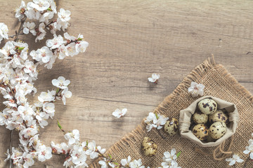Apricot tree blossom branch and quail eggs in a bag