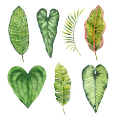 Watercolor hand painted leaves of tropical plants on white background
