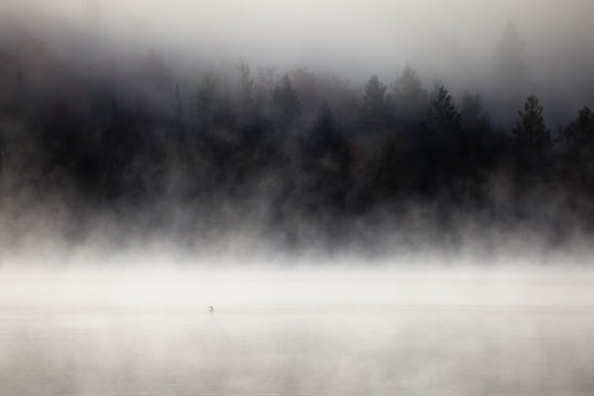 Fog over lake with a loon on the foreground. Lax Lake, Minnesota, USA.