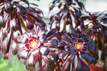 exotic dark red flowers