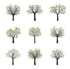 Set of vector trees with green leaves. Vector Illustration.