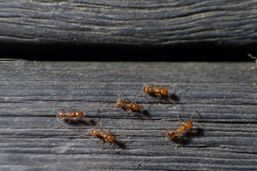 group of ants