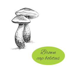 Brown Cap Boletus Drawing