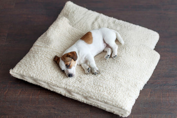 Sleeping puppy on dog bed