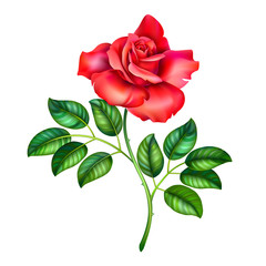 3D illustration of red rose