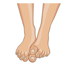 Female feet, barefoot, front view. One foot lying on the other. Healthy toenails with pedicure. Vector illustration, hand drawn cartoon style isolated on white.
