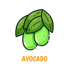 Vector icon of avocado with leaves, cute flat line style. Illustration for food themed products: stickers, package, kitchen textile and accessories, menu, food markets etc.