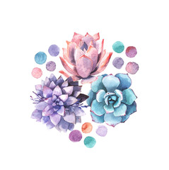 Delicate illustration with succulents in watercolor style.