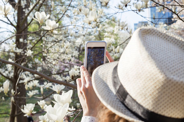 Girl taking pictures of white magnolia