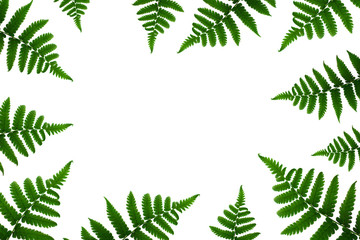 Tropical green leaf frame on white background