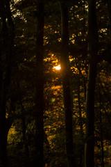 Sun shining through trees during sunset