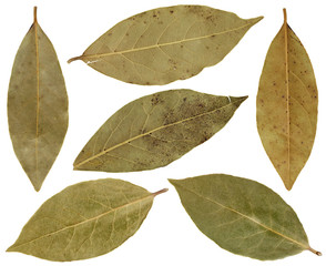 Dry leaves of laurel are used as a spice