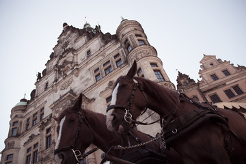 Two brown horses carrying a horse carriage in dresden in germany in front of an old building on a sunny day