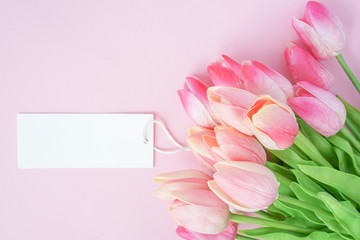close up on group of pink petal  tulip flowers blossom with blank whit pink color background for design concept