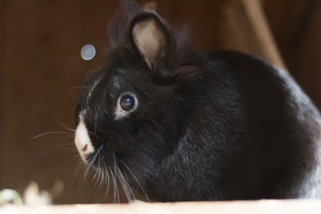 black rabbit or bunny from the side in a shed