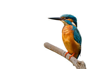 Türaufkleber Vogel Colorful tiny bird.Beautiful bird Common Kingfisher perching on branch isolated white background and clipping path.