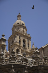The tower of the cathedral santa maria of the spanish city of murcia with beige stone on a sunny day in summer in spain with a black bird flying