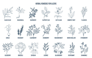 Best medicinal herbs for ulcers
