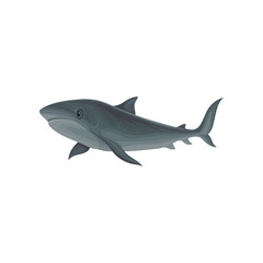 Shark marine mammal, inhabitant of sea and ocean vector Illustration on a white background