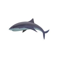 Shark marine mammal creature vector Illustration on a white background