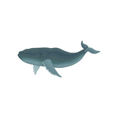 Blue whale marine mammal, inhabitant of sea and ocean vector Illustration on a white background
