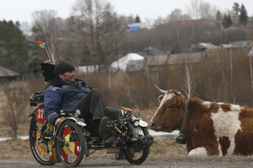 Local resident Seryogin rides a three-wheeled velomobile which he made himself on his own design, past a cow in the Siberian village of Balakhta