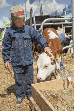 child feeds brown calf