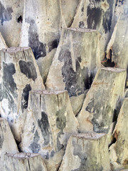 trunk detail of palm tree background