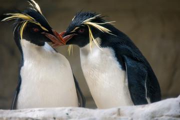 two penguins kissing