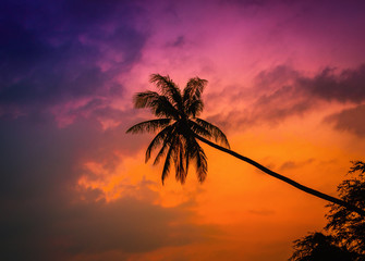 Wall Mural - Silhouette coconut palm trees on beach at twilight. Vintage tone.