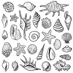 Sea shells vector line set. Black and white doodle illustrations.